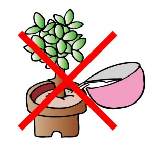 米 とぎ汁 植物 水やり ダメ